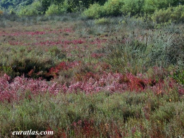 Click to download the Fields of Heather Butrint